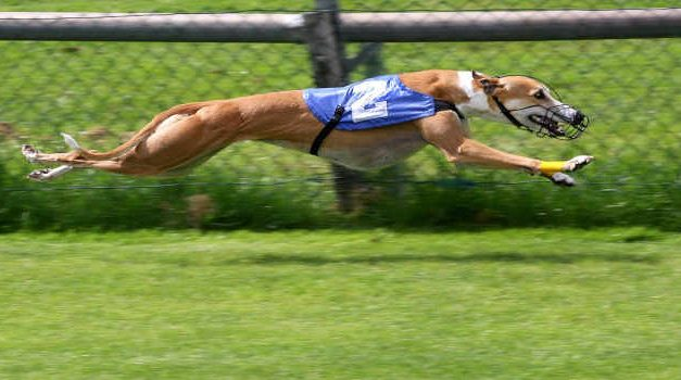 Irish Greyhound Board Gets Behind Responsible Gambling